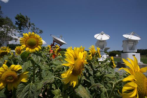 Nobeyama Radio Observatory_05