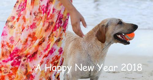 Nappy new year 2018