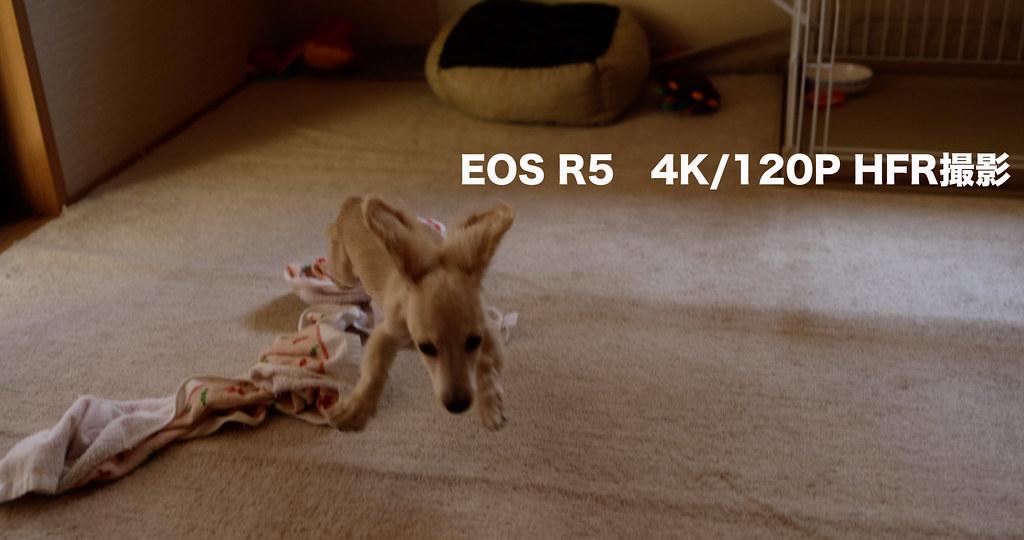 EOS R5 4K120P_01